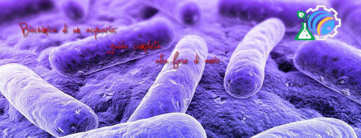Avvio di un acquario: biochimica della vasca