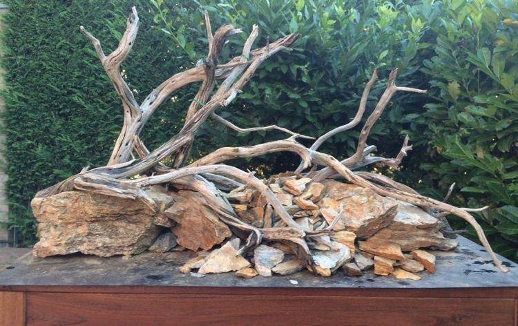 Usare legni e radici in acquario