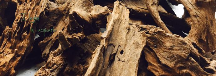 I legni in acquario